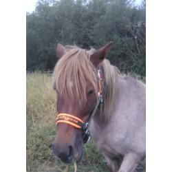 Horse halter 2 Cob