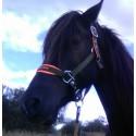 Equestrian needs